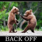 back off bears